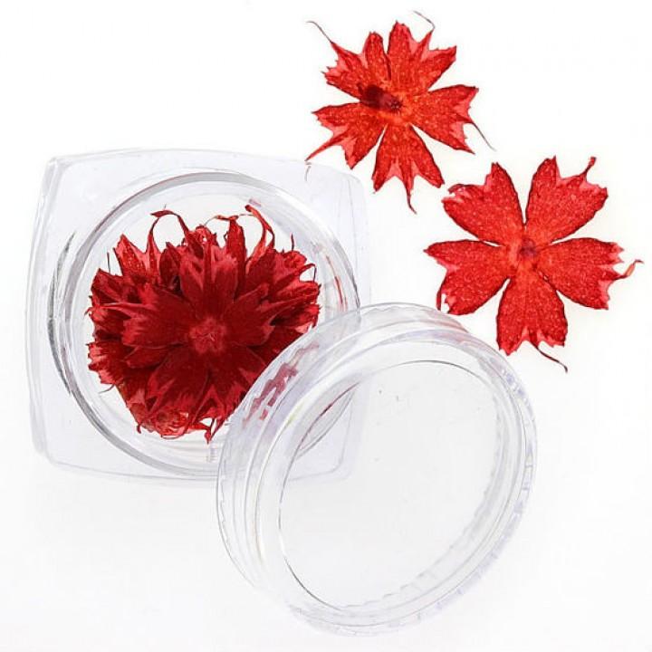 Сухоцветы для дизайна и украшения ногтей №100