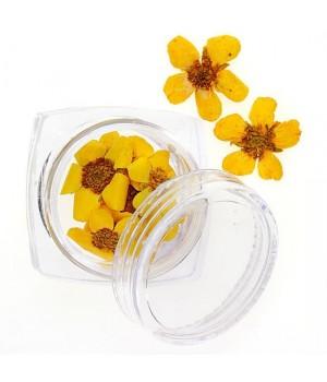 Сухоцветы для дизайна ногтей №101