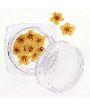 Сухоцветы для дизайна ногтей №105