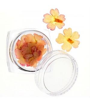 Сухоцветы для дизайна ногтей №25