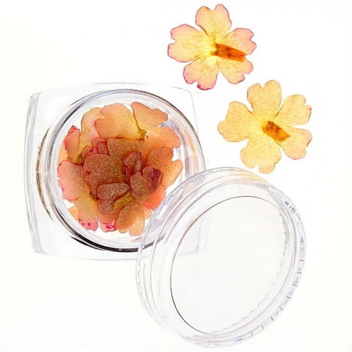 Сухоцветы для дизайна и украшения ногтей №25