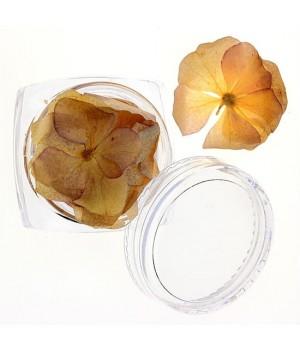 Сухоцветы для дизайна ногтей №26