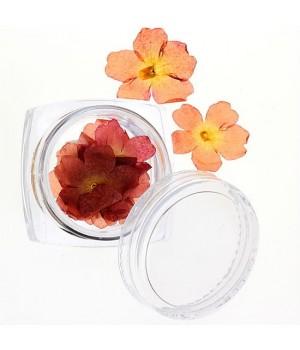 Сухоцветы для дизайна ногтей №29