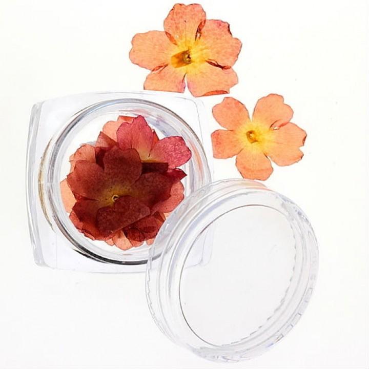 Сухоцветы для дизайна и украшения ногтей №29