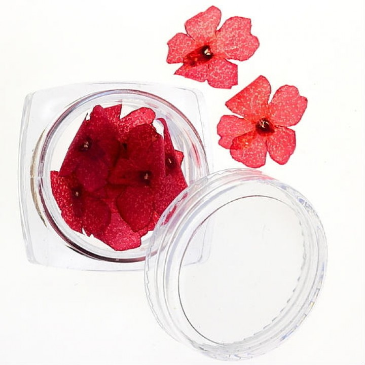 Сухоцветы для дизайна и украшения ногтей №30