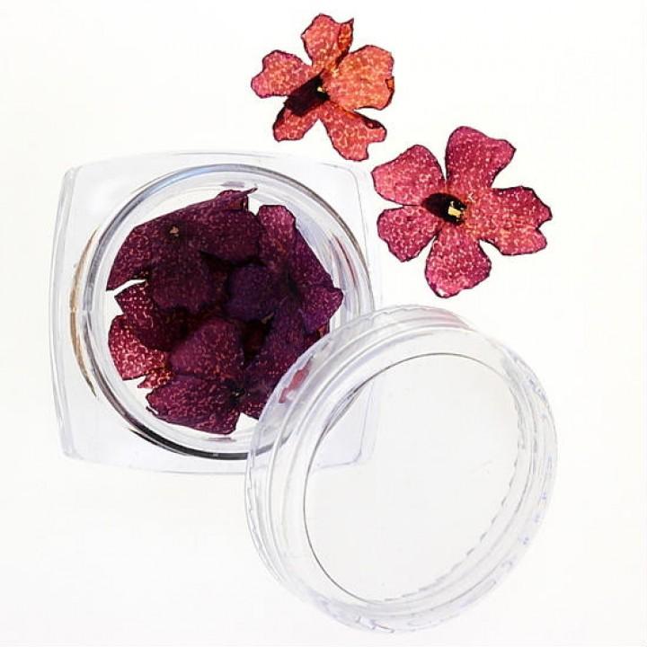 Сухоцветы для дизайна и украшения ногтей №33