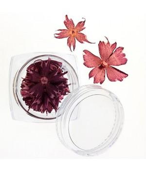 Сухоцветы для дизайна ногтей №35