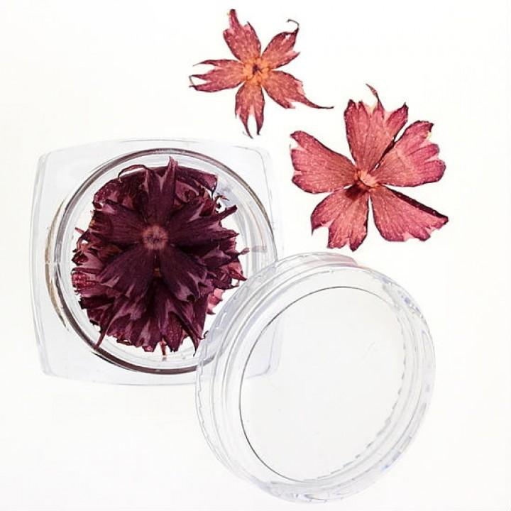 Сухоцветы для дизайна и украшения ногтей №35