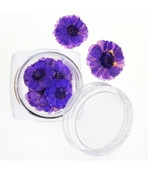 Сухоцветы для дизайна ногтей №36