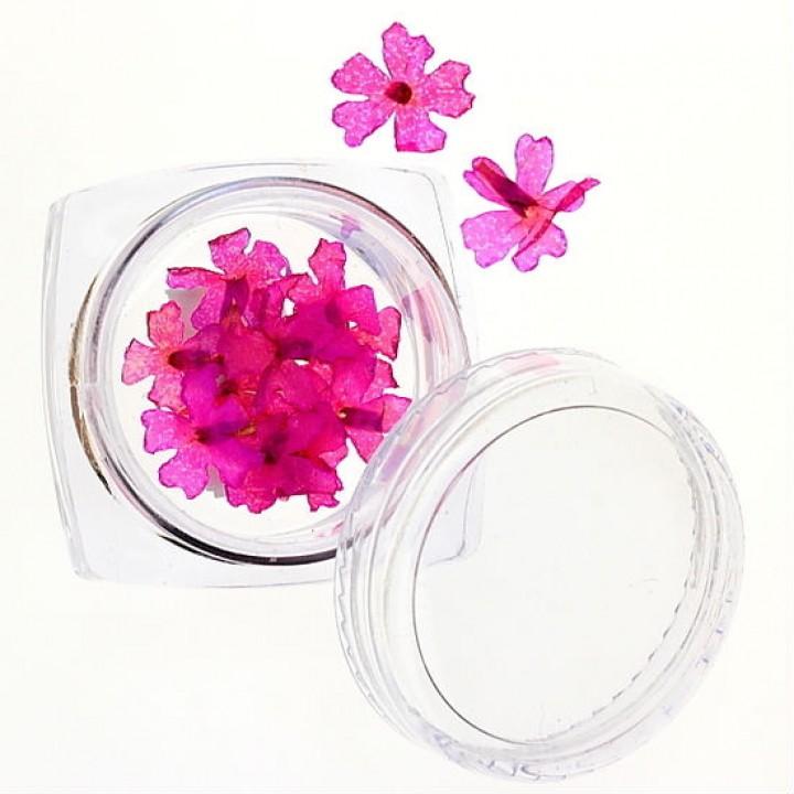 Сухоцветы для дизайна и украшения ногтей №37