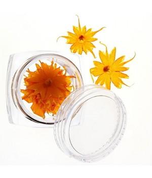 Сухоцветы для дизайна ногтей №41
