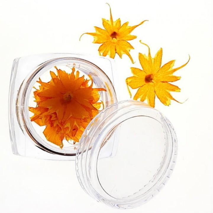 Сухоцветы для дизайна и украшения ногтей №41