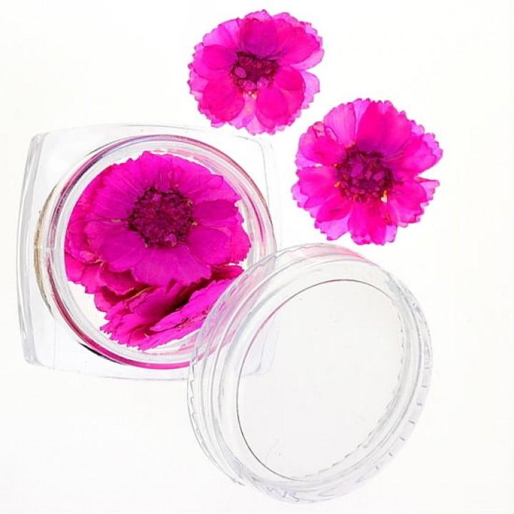 Сухоцветы для дизайна и украшения ногтей №42