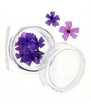 Сухоцветы для дизайна ногтей №44