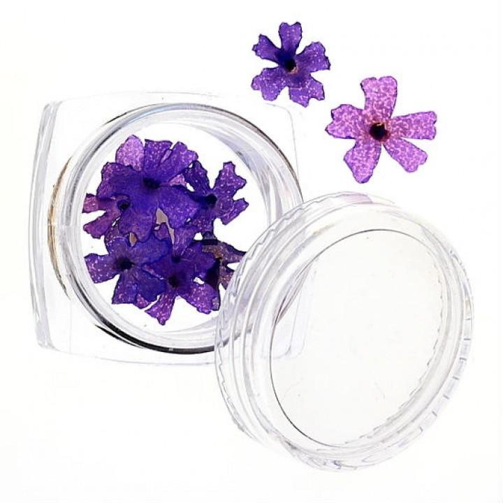 Сухоцветы для дизайна и украшения ногтей №44