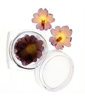 Сухоцветы для дизайна ногтей №45