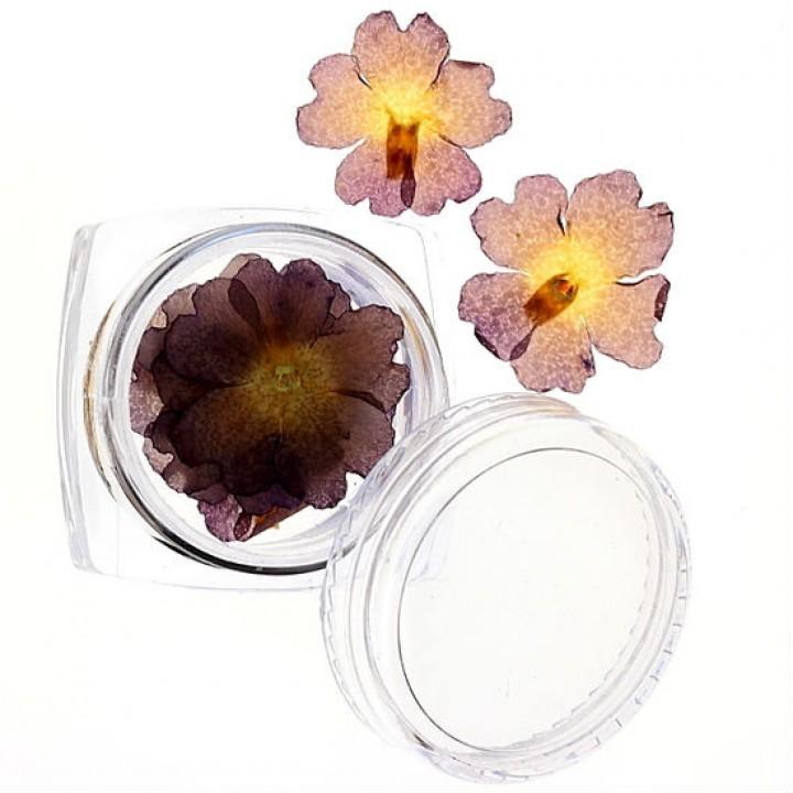 Сухоцветы для дизайна и украшения ногтей №45