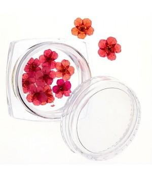 Сухоцветы для дизайна ногтей №47