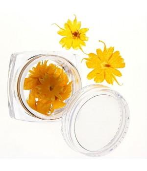 Сухоцветы для дизайна ногтей №48