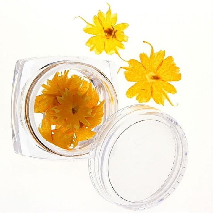 Сухоцветы для дизайна и украшения ногтей №48