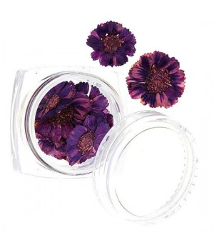 Сухоцветы для дизайна ногтей №53