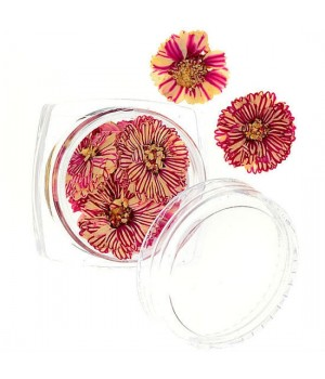 Сухоцветы для дизайна ногтей №54