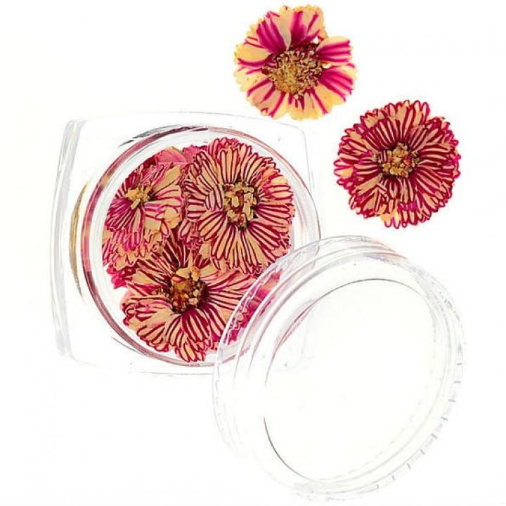 Сухоцветы для дизайна и украшения ногтей №54