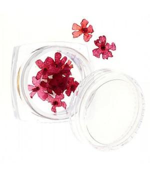 Сухоцветы для дизайна ногтей №55