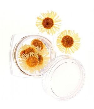 Сухоцветы для дизайна ногтей №57