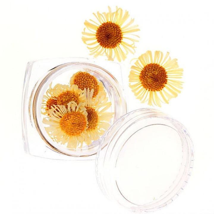 Сухоцветы для дизайна и украшения ногтей №57