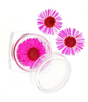 Сухоцветы для дизайна ногтей №58