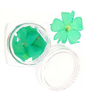 Сухоцветы для дизайна ногтей №59