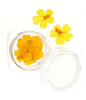 Сухоцветы для дизайна ногтей №61