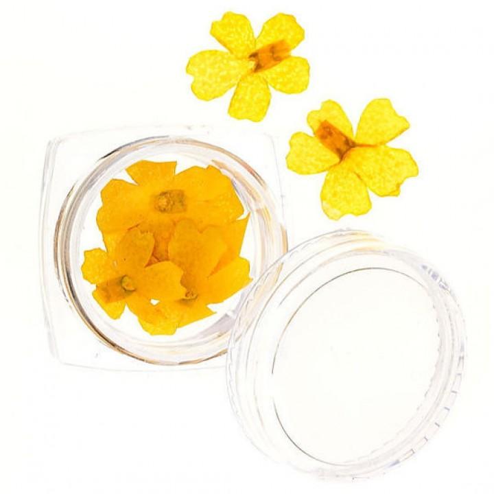Сухоцветы для дизайна и украшения ногтей №61