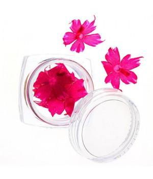 Сухоцветы для дизайна ногтей №62