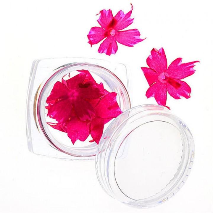 Сухоцветы для дизайна и украшения ногтей №62