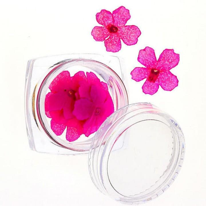 Сухоцветы для дизайна и украшения ногтей №64