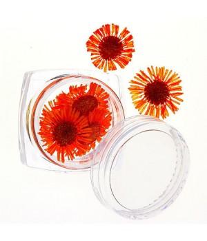 Сухоцветы для дизайна ногтей №65