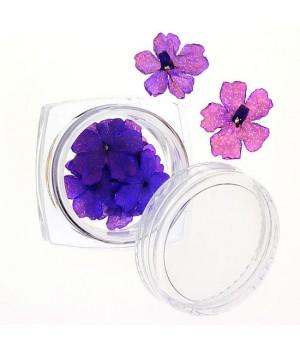 Сухоцветы для дизайна ногтей №67
