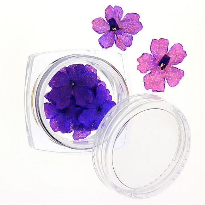 Сухоцветы для дизайна и украшения ногтей №67