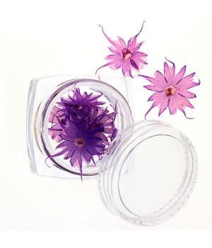 Сухоцветы для дизайна ногтей №69