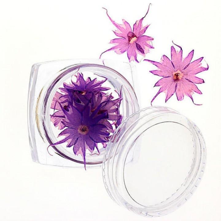 Сухоцветы для дизайна и украшения ногтей №69