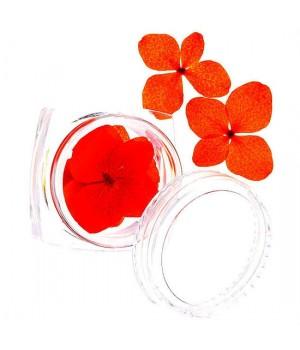 Сухоцветы для дизайна ногтей №70