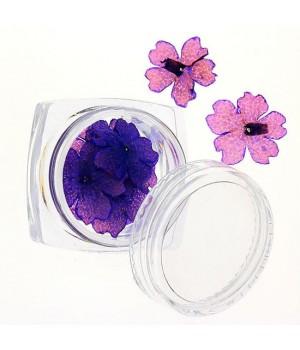 Сухоцветы для дизайна ногтей №71