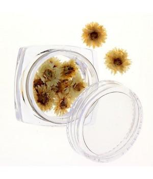 Сухоцветы для дизайна ногтей №72