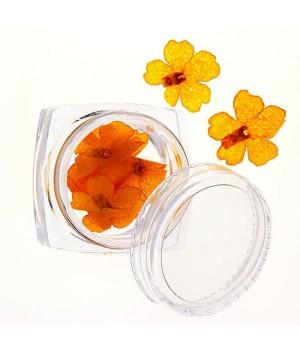 Сухоцветы для дизайна ногтей №73