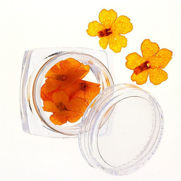 Сухоцветы для дизайна и украшения ногтей №73
