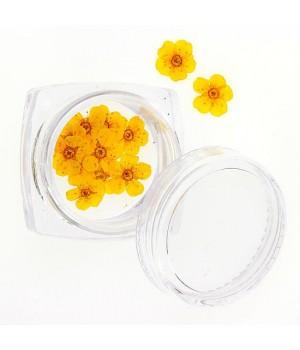 Сухоцветы для дизайна ногтей №75