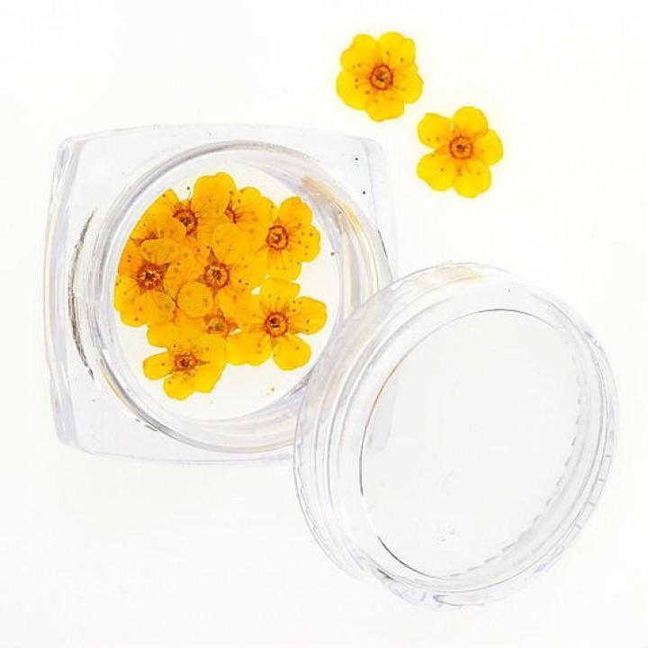 Сухоцветы для дизайна и украшения ногтей №75