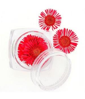 Сухоцветы для дизайна ногтей №76